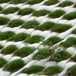 Vegetation Type geotextile mattresses